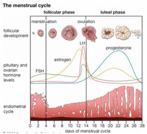 Managing endometriosis with the birth control pill